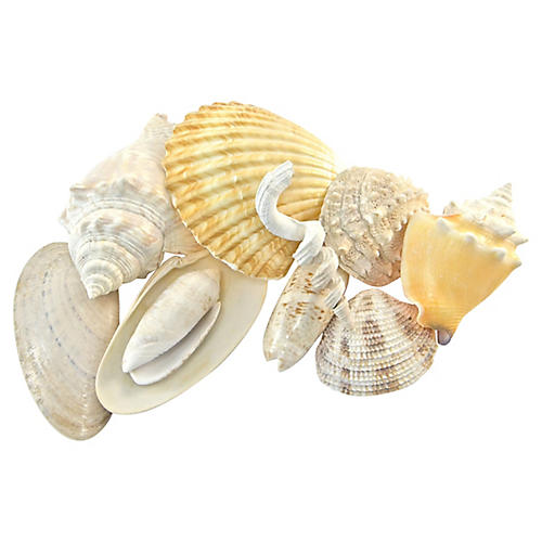 Natural Shell Collection, S/10