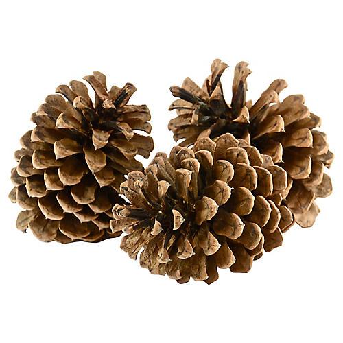 Oversize Pinecones, S/3