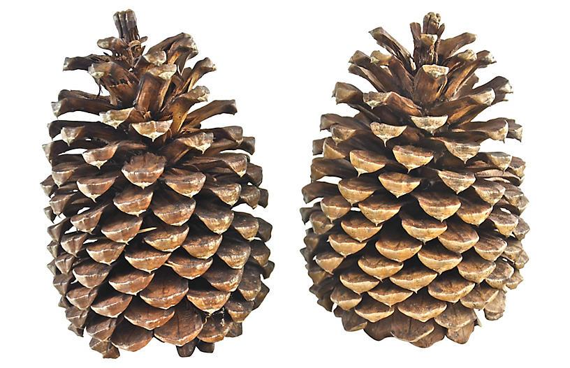 Oversize Natural Pine Cone, Pair