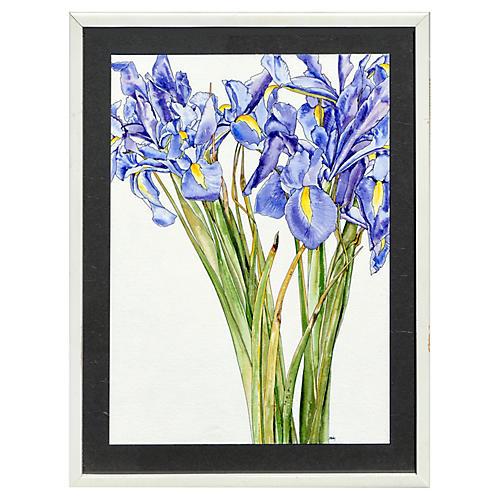 Iris Escaping