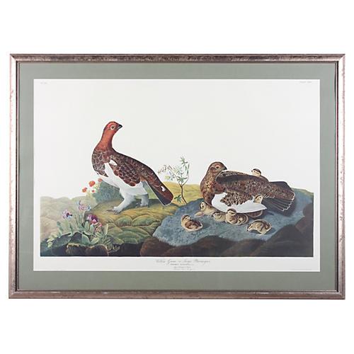 Willow Grouse, Audubon Leipzig Edition