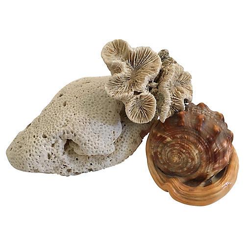 Shell & Coral Specimens, 3 Pcs