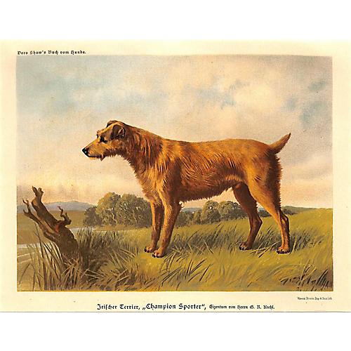Irish Terrier, Dog, Vero Shaw, 1885