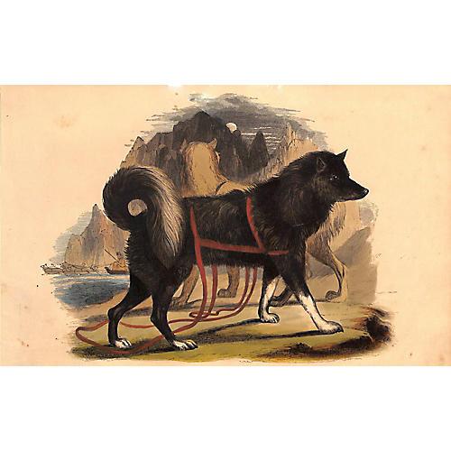 Husky, Esquimaux Dog, Antique Dog Print