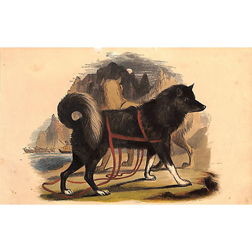 Husky, Esquimaux Dog, Antique Dog Print
