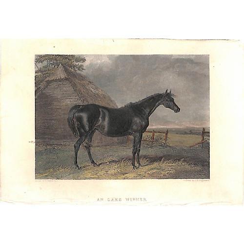 Race Horse, Oaks Winner, 1868