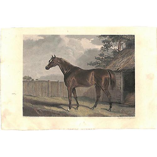Chestnut Race Horse, Derby Winner, 1868