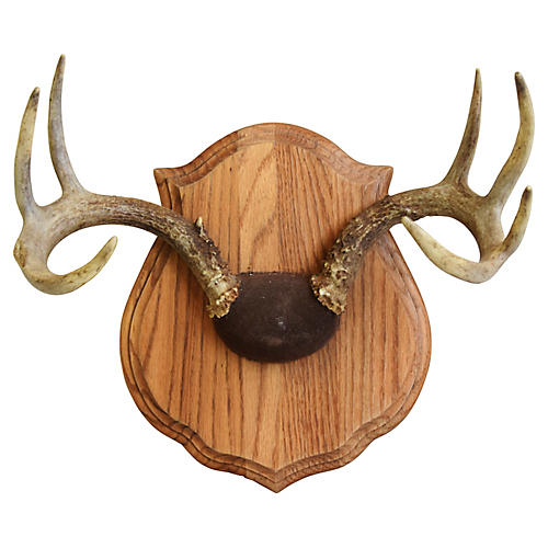 Mounted Trophy Antlers on Wood Plaque