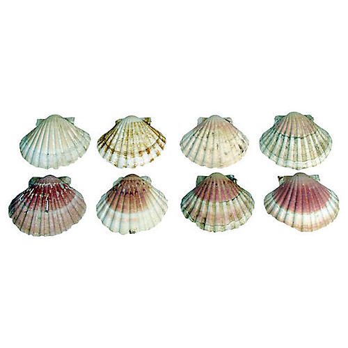 Pink Hued Scallop Shells, S/8