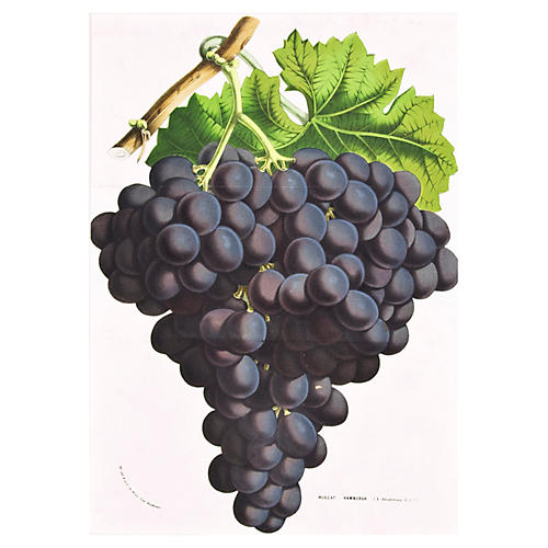 Muscat Grapes Chromolithograph, C. 1876