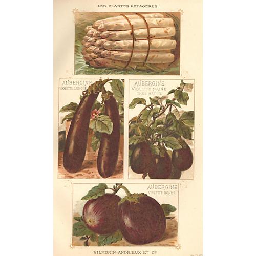 French Eggplant & Asparagus, 1925
