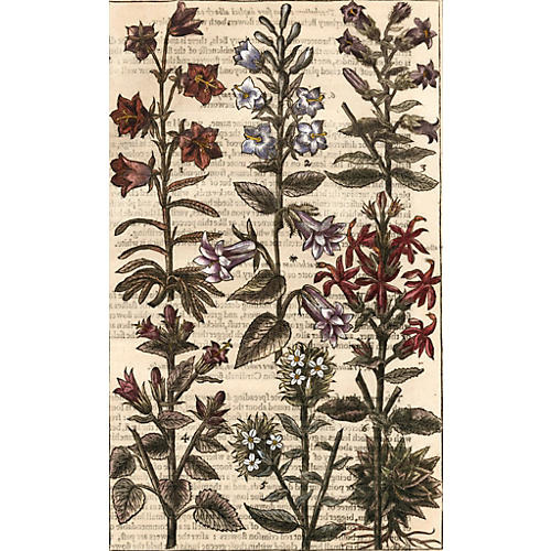 Hand-Colored Bell Flowers, 1629