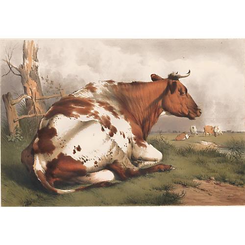Resting Bull, Thomas Sidney Cooper, 1839