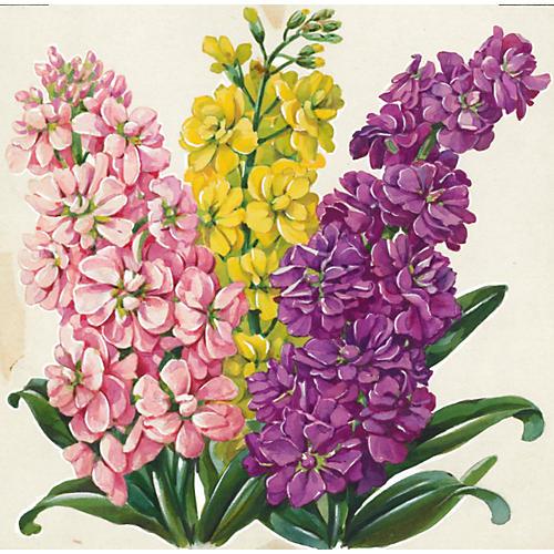Rainbow Hyacinth Watercolor, C. 1935