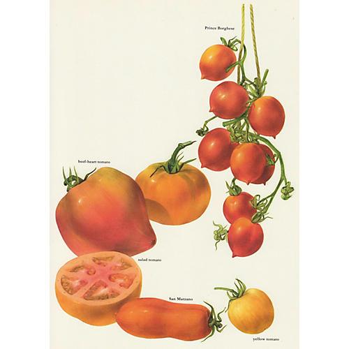 Tomato Lithograph, C. 1975