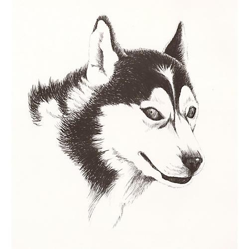 Husky Lithograph, 1972