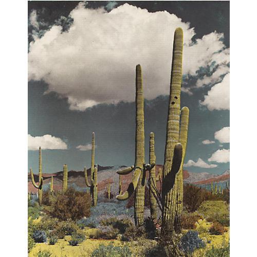 Giant Cactus, Arizona 1943