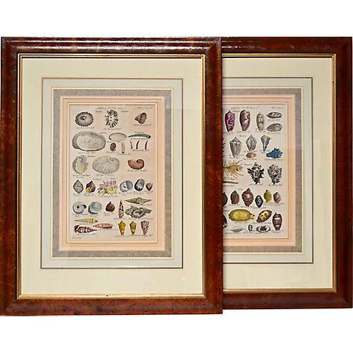 18th-C. Shell Engraved Prints, Pair