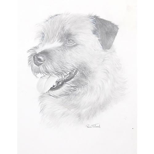 Norfolk Terrier by Rex Flood