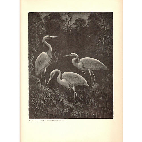 White Herons at Home by Benson B Moore