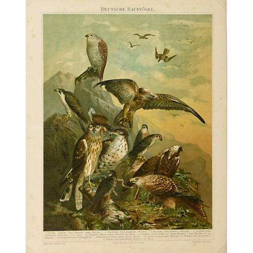 Birds of Prey Print, C. 1880