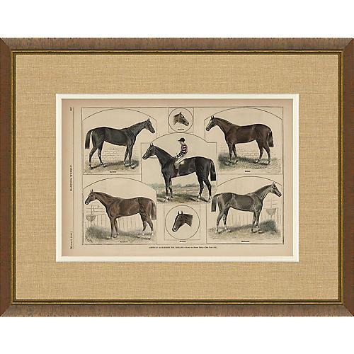 Harper's Weekly Horse Illustration 1880