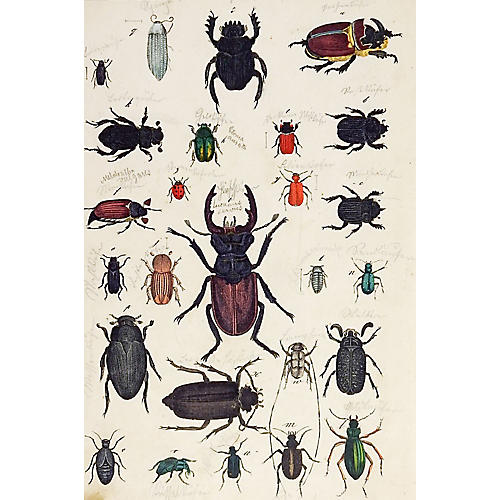 Hand-Colored Beetle Woodcut Print