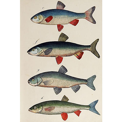 Hand-Colored Fish Woodcut Print