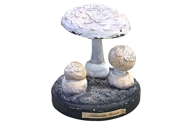 Botanical Mushroom Study Model