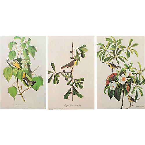 Birds of America Lithographs by Audubon