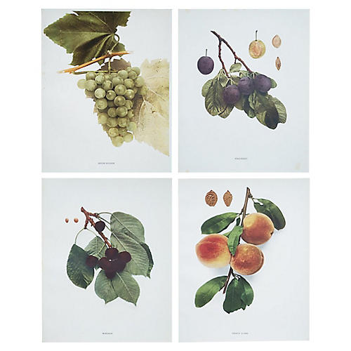 Antique Fruits Photogravures by Hedrick