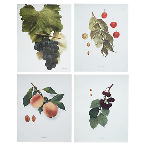 Fruits of New York Photogravures, C.1900