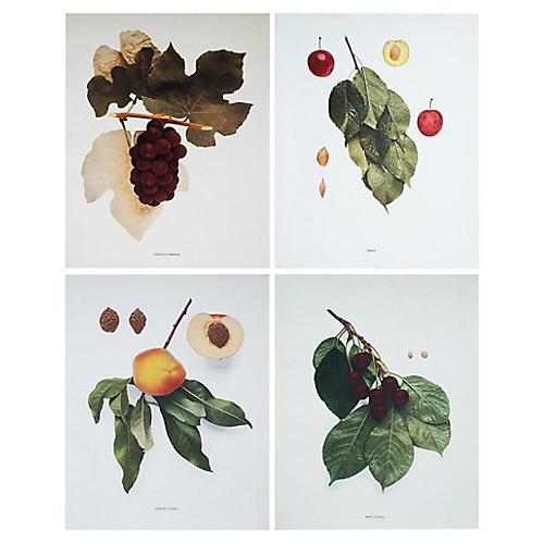 C.1900 Fruits of NY by U.P. Hedrick, S/4
