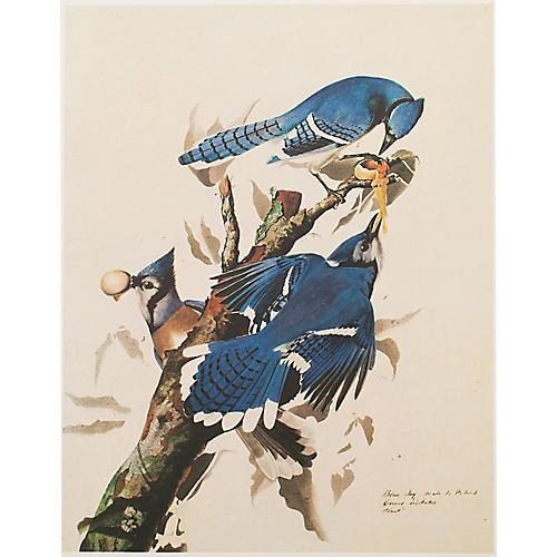 Blue Jay by Audubon, 1966