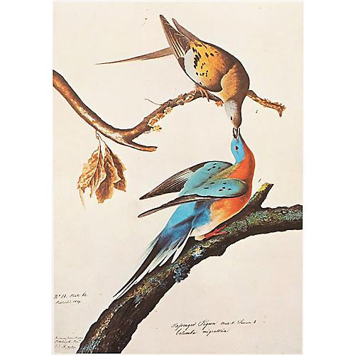1966 Audubon, Passenger Pigeon