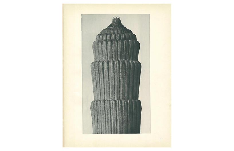 1928 Karl Blossfeldt, Winter Horsetail