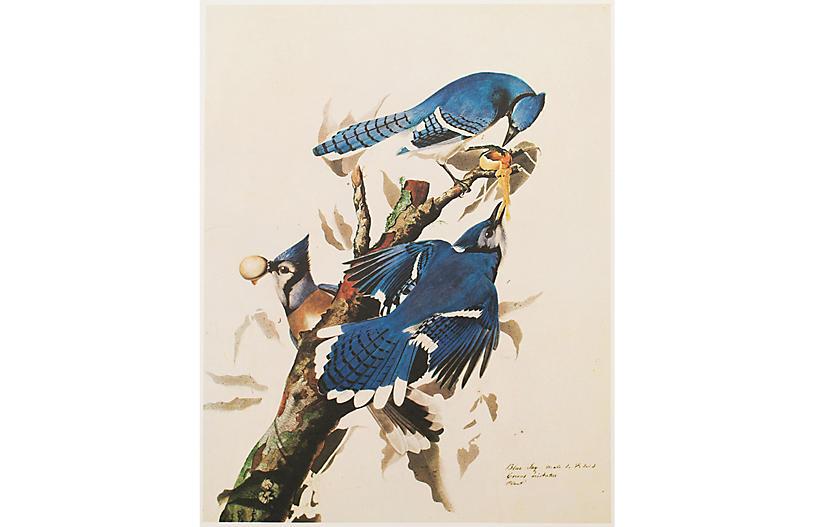 1966 Audubon, Blue Jay
