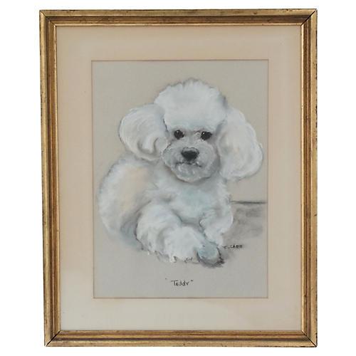Poodle Bichon Frise Dog Portrait