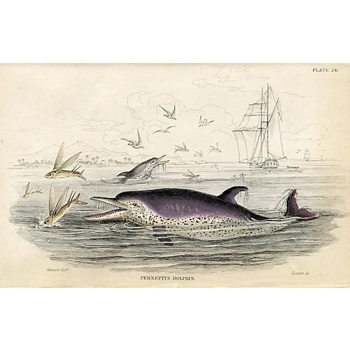 19th-C. Dolphin Engraving