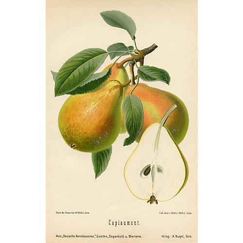 German Pear Print, 1894