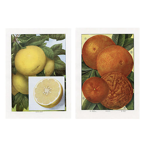 Citrus Prints, Pair