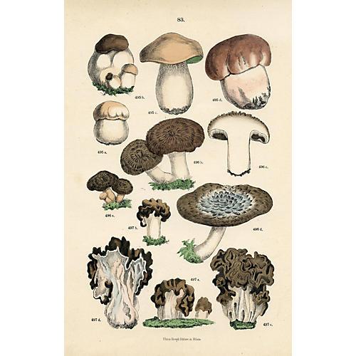 Italian Mushroom Print, 1888