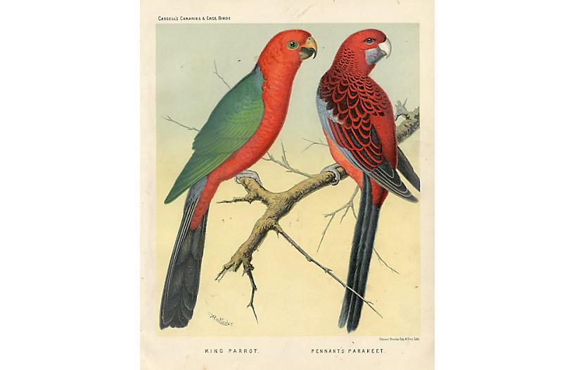 Parrot & Parakeet, 1880