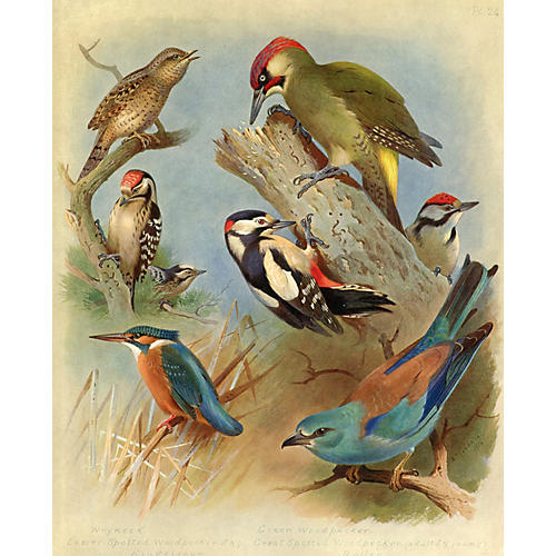 Kingfisher and Woodpeckers, 1915
