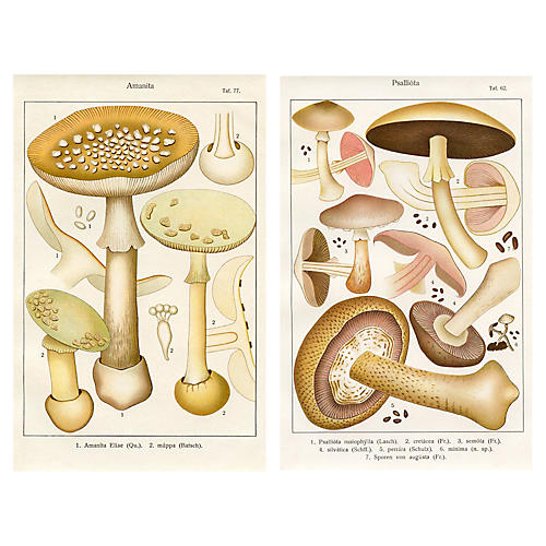 French Mushroom Prints, Pair