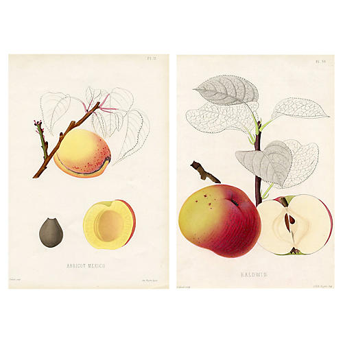 French Apricot and Apple Prints, Pair