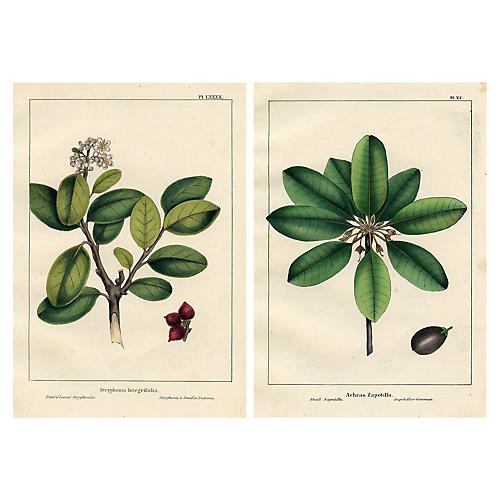 19th-C. North American Tree Prints, Pair