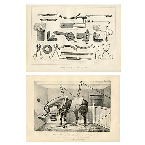 Equestrian Veterinary Prints, Pair
