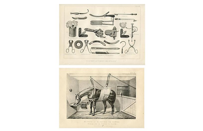 Equestrian Veterinary Prints, Pair