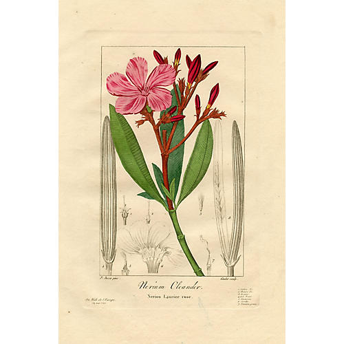 French Botanical Print by Pancrace Bessa